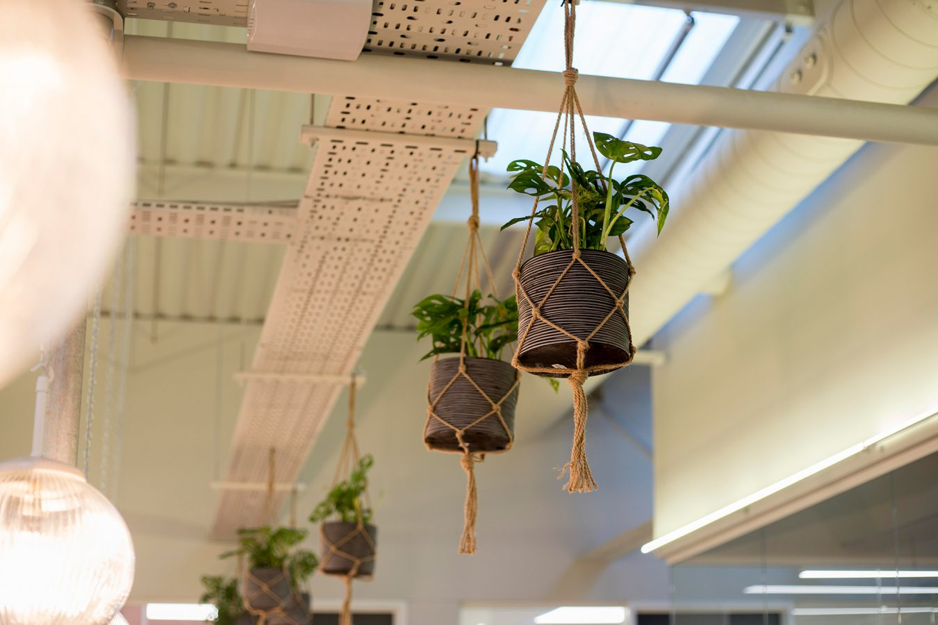 Plants pots easy to grow in office space near London.